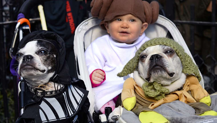"""Dogs and baby dressed as characters from """"Star Wars"""" attend the 23rd Annual Tompkins Square Halloween Dog Parade on October 26, 2013 in New York City. Thousands of spectators gather in Tompkins Square Park to watch hundreds of masquerading dogs in the countrys largest Halloween Dog Parade. AFP PHOTO / TIMOTHY CLARY"""