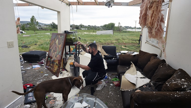 LONGMONT , CO - JUNE 5: Brandon Scott, with his dog Baxter, salvages what he can in the living room of his home that was destroyed when a tornado ripped through it at 15763 North 83rd tree in Longmont, Colorado hard on June 5, 2015. The duo along with Scott's 75 year old grandfather survived the tornado by staying in their basement as it roared through the area.