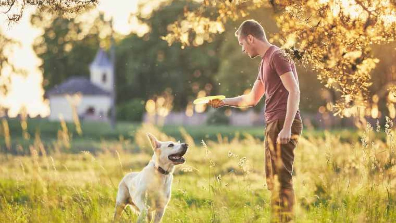 The benefits of playing with your dog