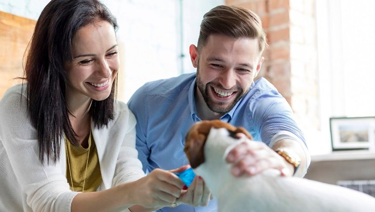 Smiling couple petting Jack Russell Terrier dog on bed