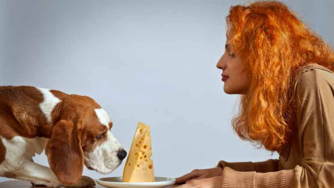 Can Dogs Eat Cheese? Is Cheese Safe For