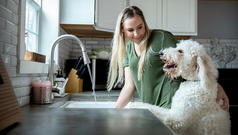 Young woman plays with Goldendoodle puppy while she washes dishes at home in kitchen