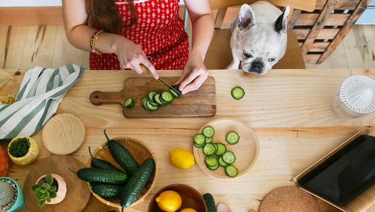 French bulldog watching woman cutting cucumber on table