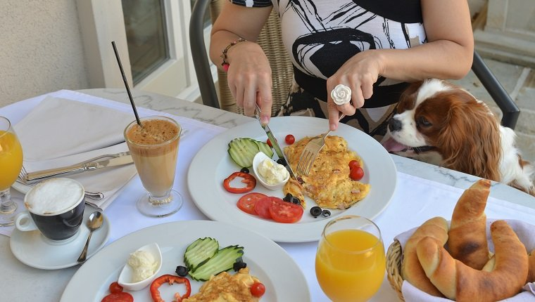 Woman having rich, delicious breakfast while her dog - Cavalier King Charles Spaniel - looking at fresh and savory buns