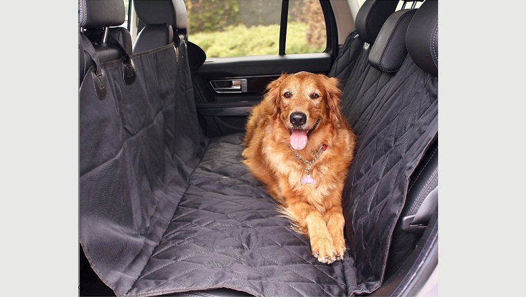 dog on car seat cover