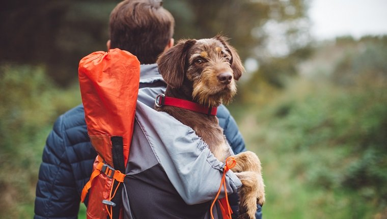 Young man walking in the woods with their dog. Carrying a dog in a backpack on his back. They are happy and joyful. Enjoying a beautiful autumn day in the mountain forest.