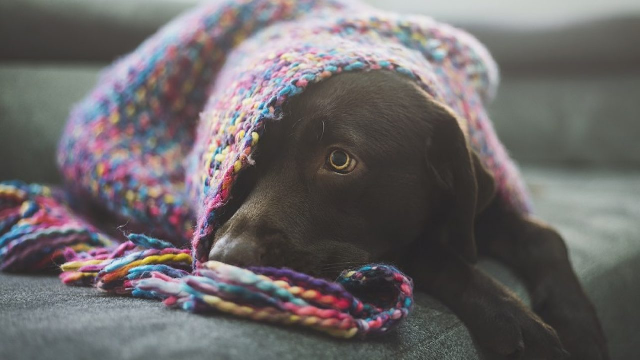 How To Plan A Comfy Safe Room For A New Dog In Your Home Dogtime