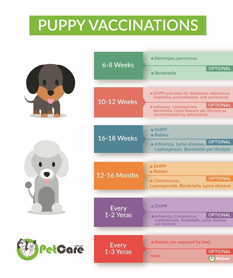 a vaccination schedule for puppies and dogs