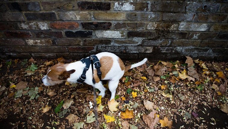 Dog owners can be fined if they fail to clear up after their dog's mess.