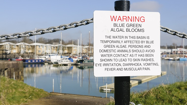 Sign at Preston Marina warning the public about the dangers of blue-green algae