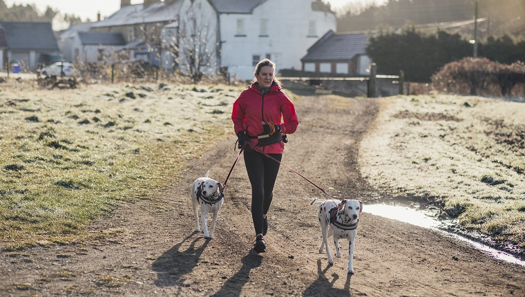 Mature Caucasian female on a rural track, out for an early morning jog with her two Dalmatian dogs.