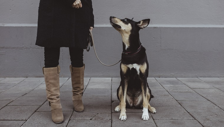 Dog looking up at female pet owner standing on footpath in city
