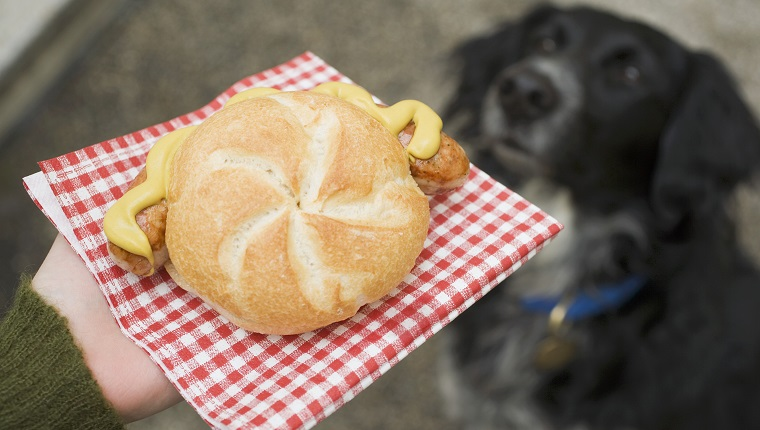 Hand holding sausage (bratwurst) in bread roll, dog in background