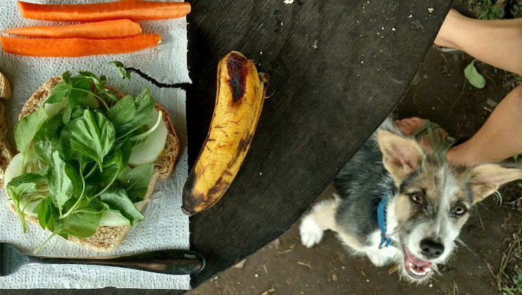 Directly Above Shot Of Dog Sitting By Table With Breakfast
