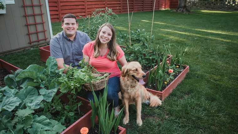 Man and woman crouch next to a raised garden bed next to their golden retriever and smile at the camera as they show off a basket of vegetables they harvested from the garden.
