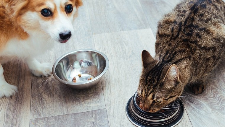 Dog and cat are eaten together in the kitchen. Close-up