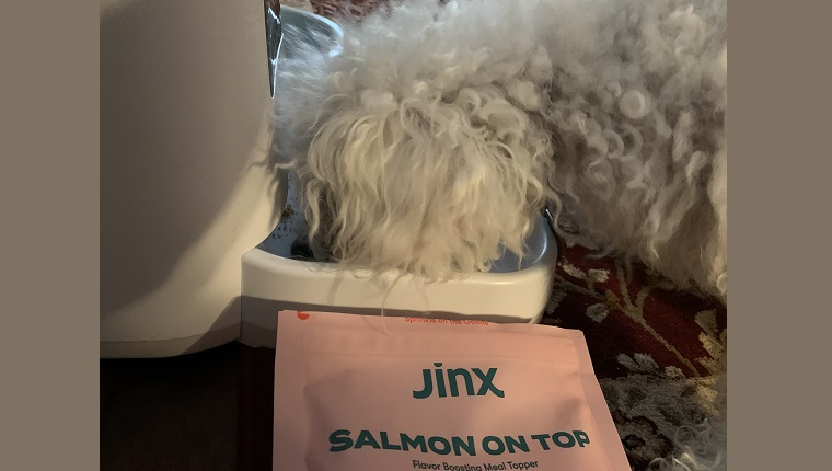 """With Jinx's """"Salmon on Top,"""" Leia's kibble was gone in a flash."""