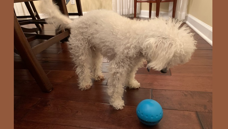Placing the ball upside-down gets treats to spill out with even a gentle nudge