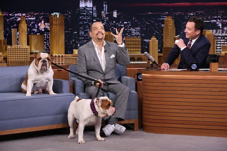 Ice-T Brings His Bulldogs To Visit Jimmy Fallon On 'The Tonight Show'