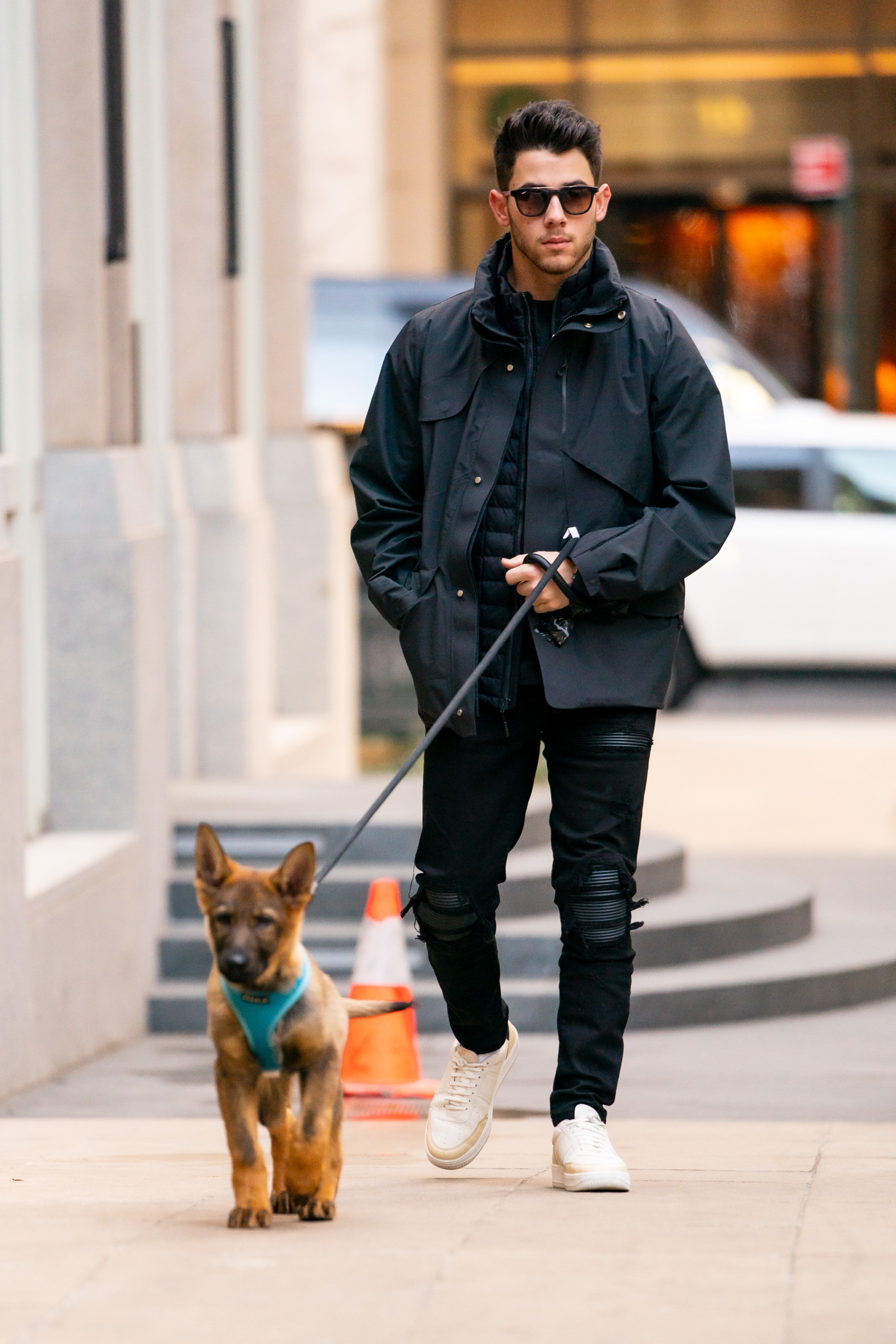 Nick Jonas Walks His Puppy, Gino