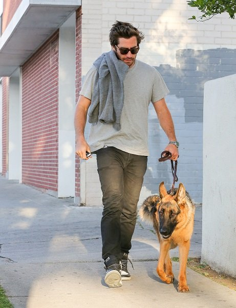Jake Gyllenhaal With His German Shepherd, Atticus