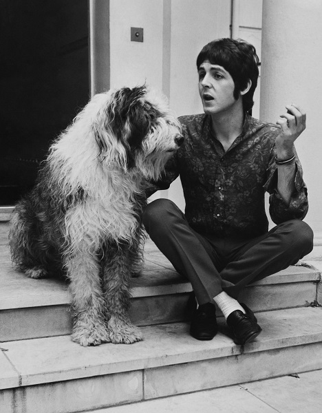 Paul McCartney Of The Beatles With His Dog, Martha, In 1967