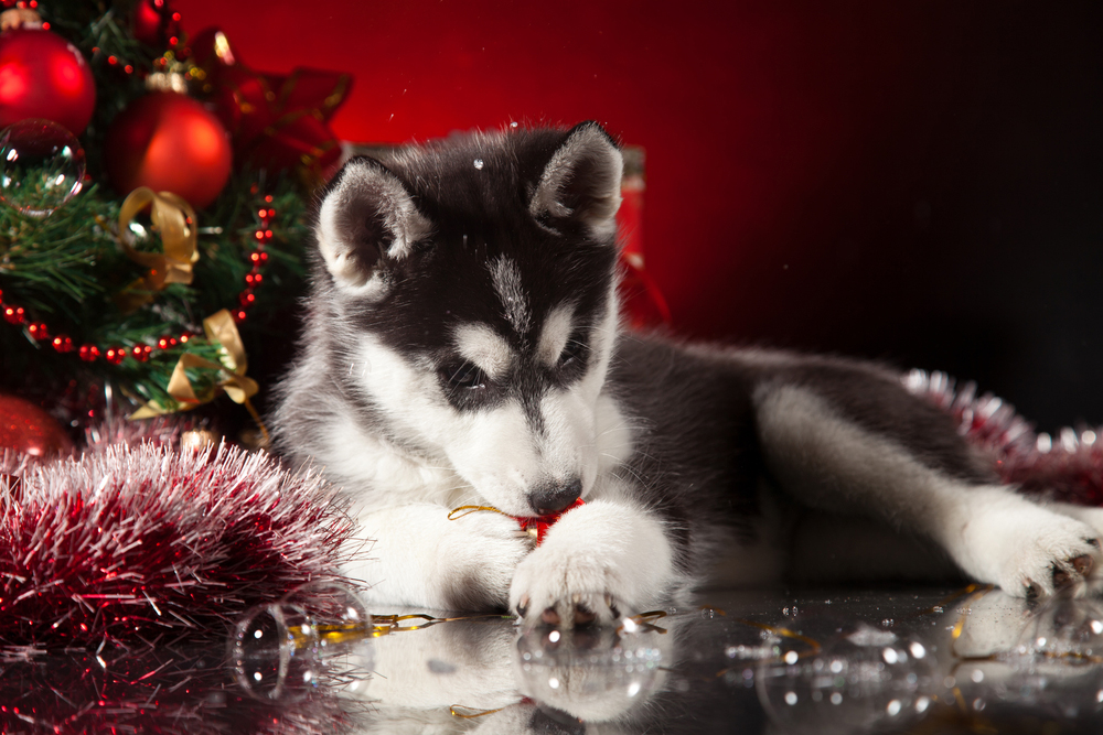 Chewing On Christmas