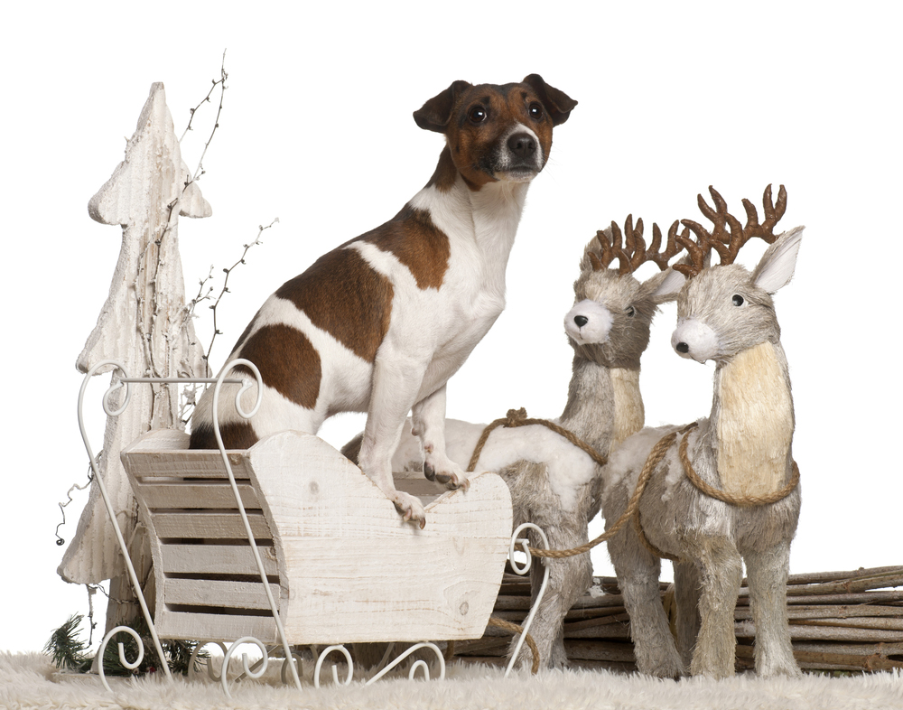 Ready For A Sleigh Ride?