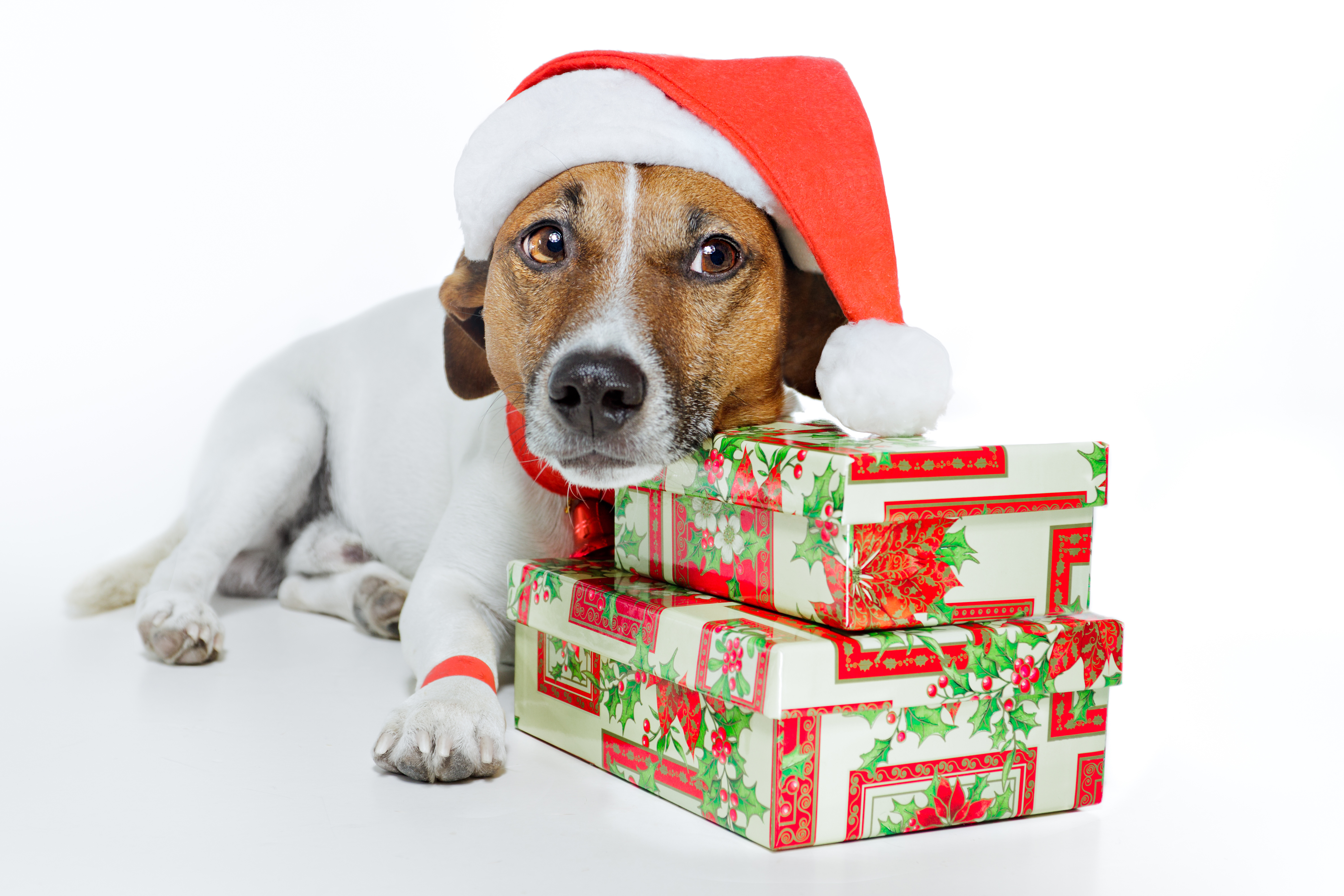 Guarding The Gifts