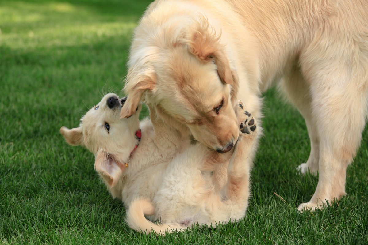 Happy Mother's Day: Mama Dogs And Their Puppies