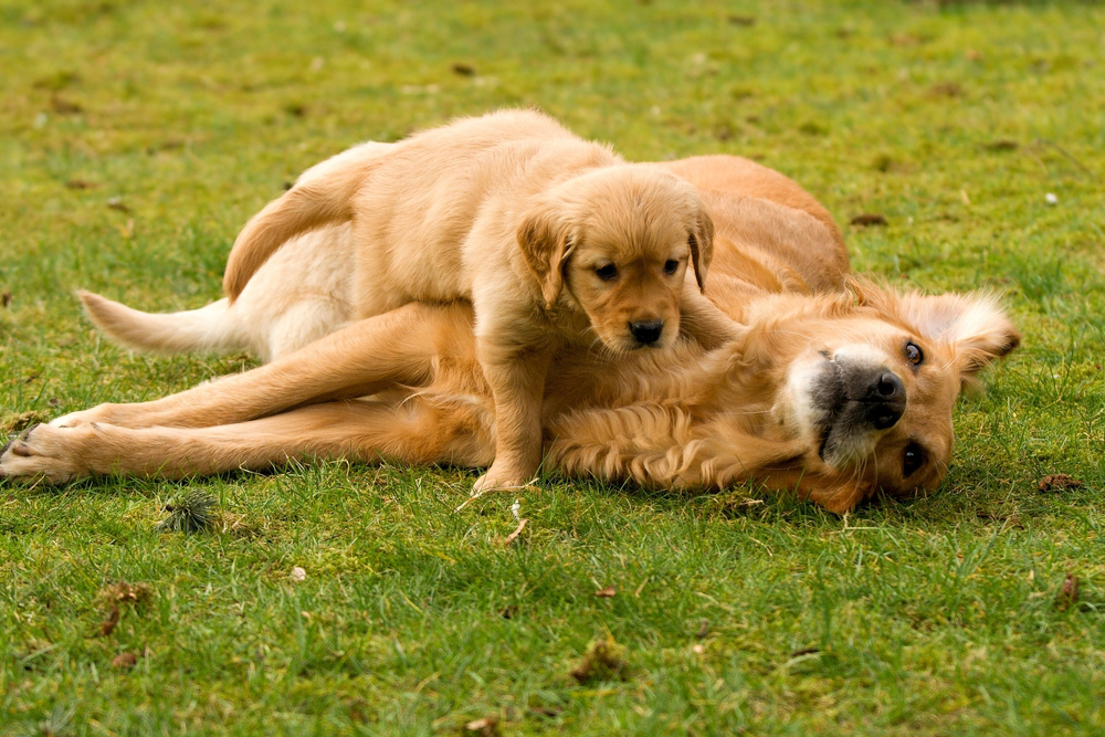 Mother's Day: Mama Dogs And Their Puppies