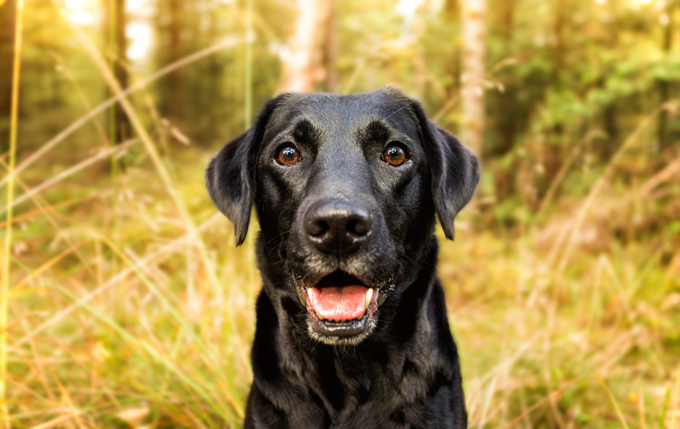 With an average lifespan of just over eleven years, the typical dog costs about $15,000, depending on breed, size, and other factors. Worth every penny!