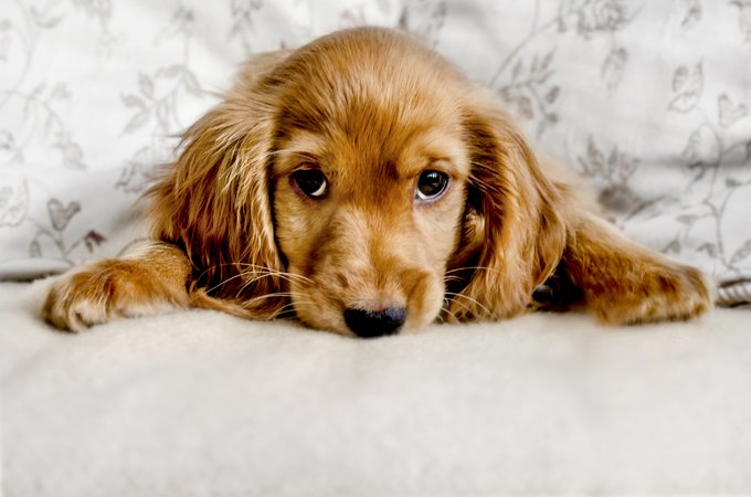 Spaying or neutering your dog can help prevent certain types of cancer.