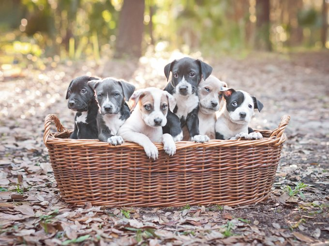 If never spayed or neutered, a pair of dogs can produce enough litters to result in the births of 66,000 puppies (including their grand-puppies and great grand-puppies) in just six years.