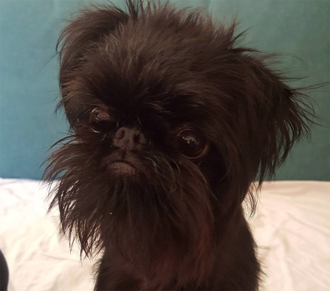 30 Small Dogs With Superior Names Pictures Dogtime
