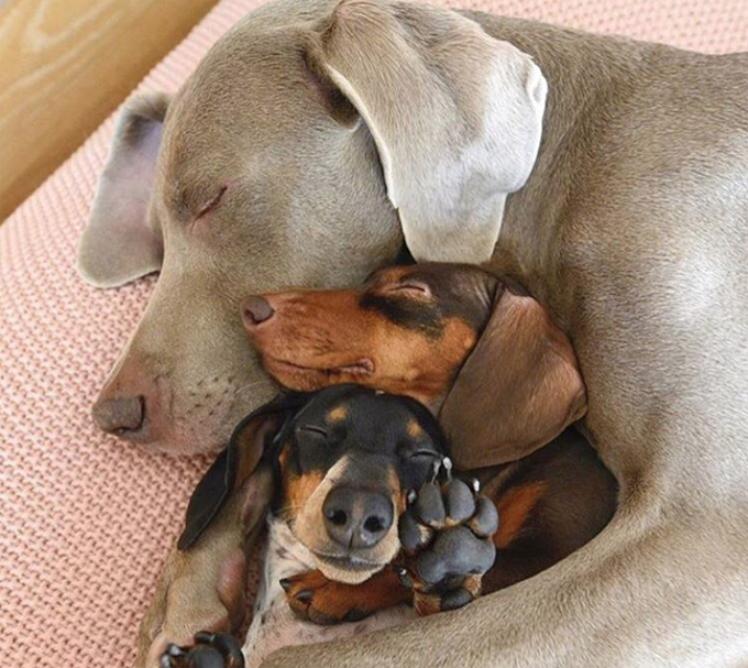 National Cuddle Up Day