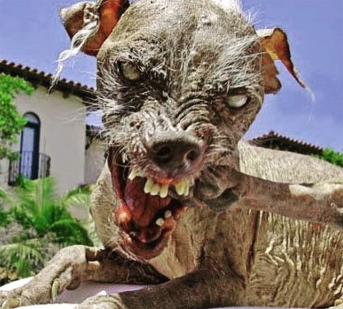 Winner of the ugliest dog contest!