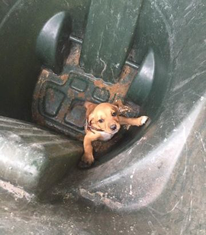 Puppy Thrown Away In Trash Can Outside Shelter