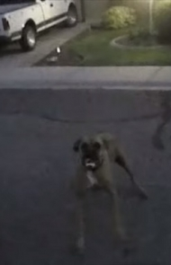 Two Aggressive Dogs Charge Police Officer – He Handles It Like A Pro