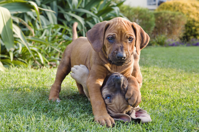 20 Pictures Of Puppies Playing
