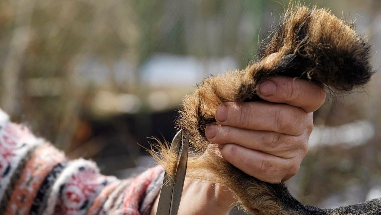 Fact #10: 'Hair Of The Dog' Comes From The Tail