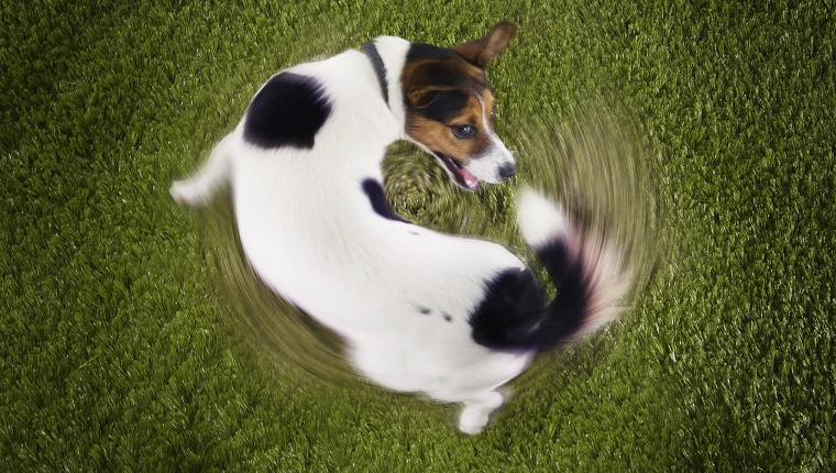 Fact #5: There Are Many Reasons For Tail Chasing