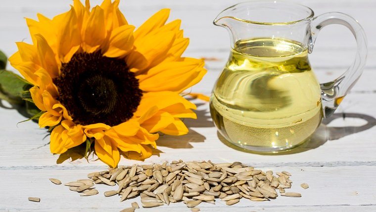 Sunflower Oil For A Shiny, Healthy Coat