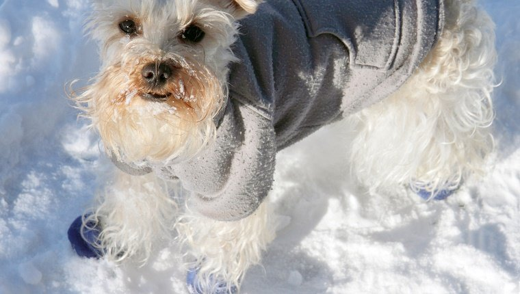 Myth 6: Dogs Don't NeedPaw Protection For Just A Short Walk