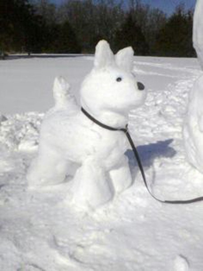 Snowdog on a walk!