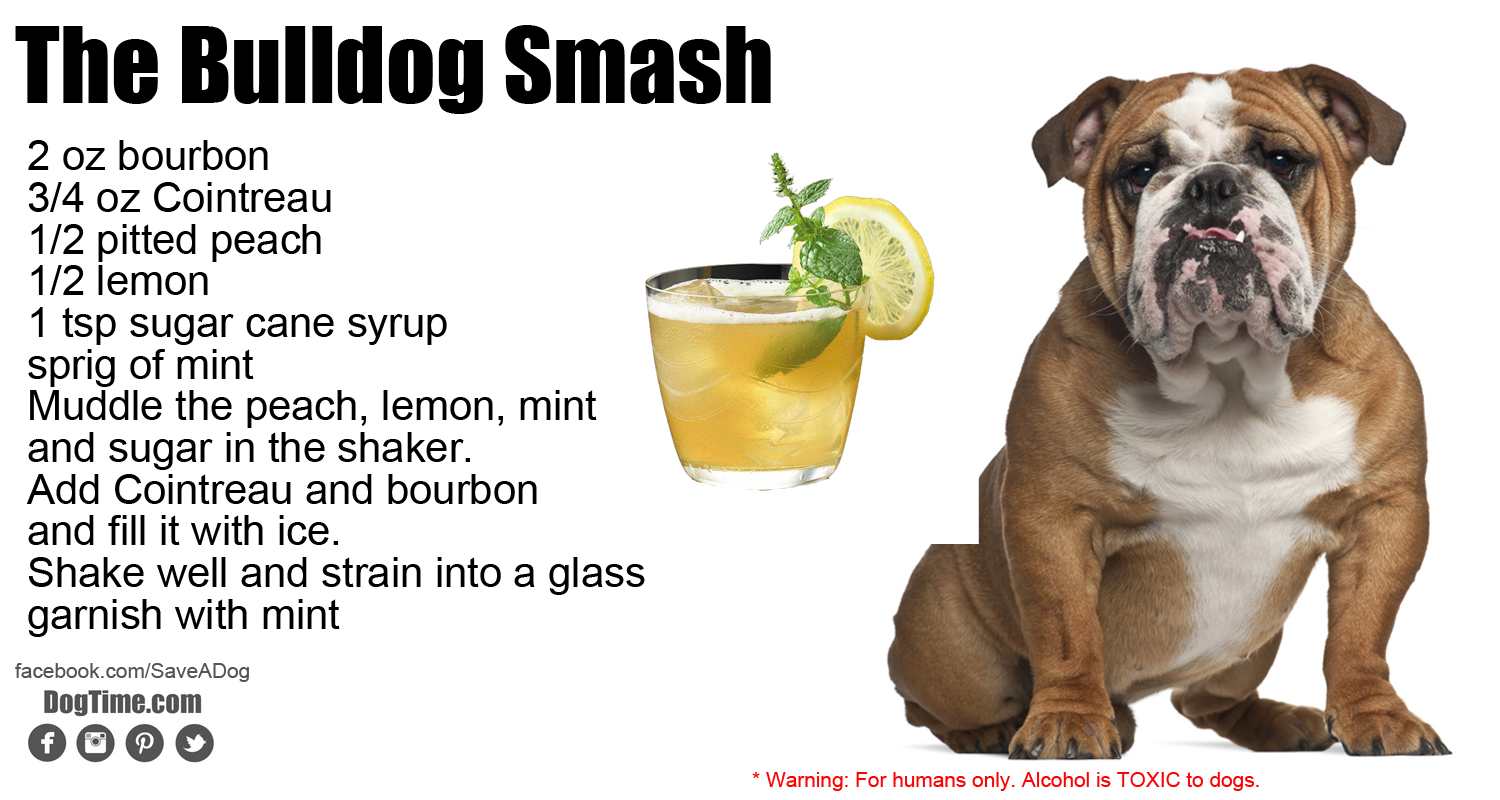 Bulldog Smash Cocktail Recipe