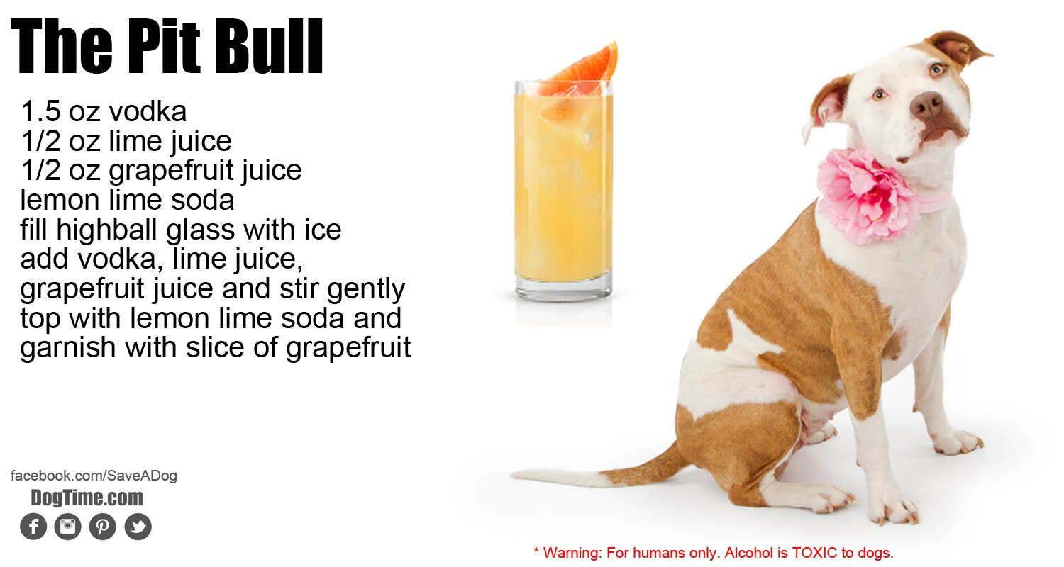 Pit Bull Cocktail Recipe