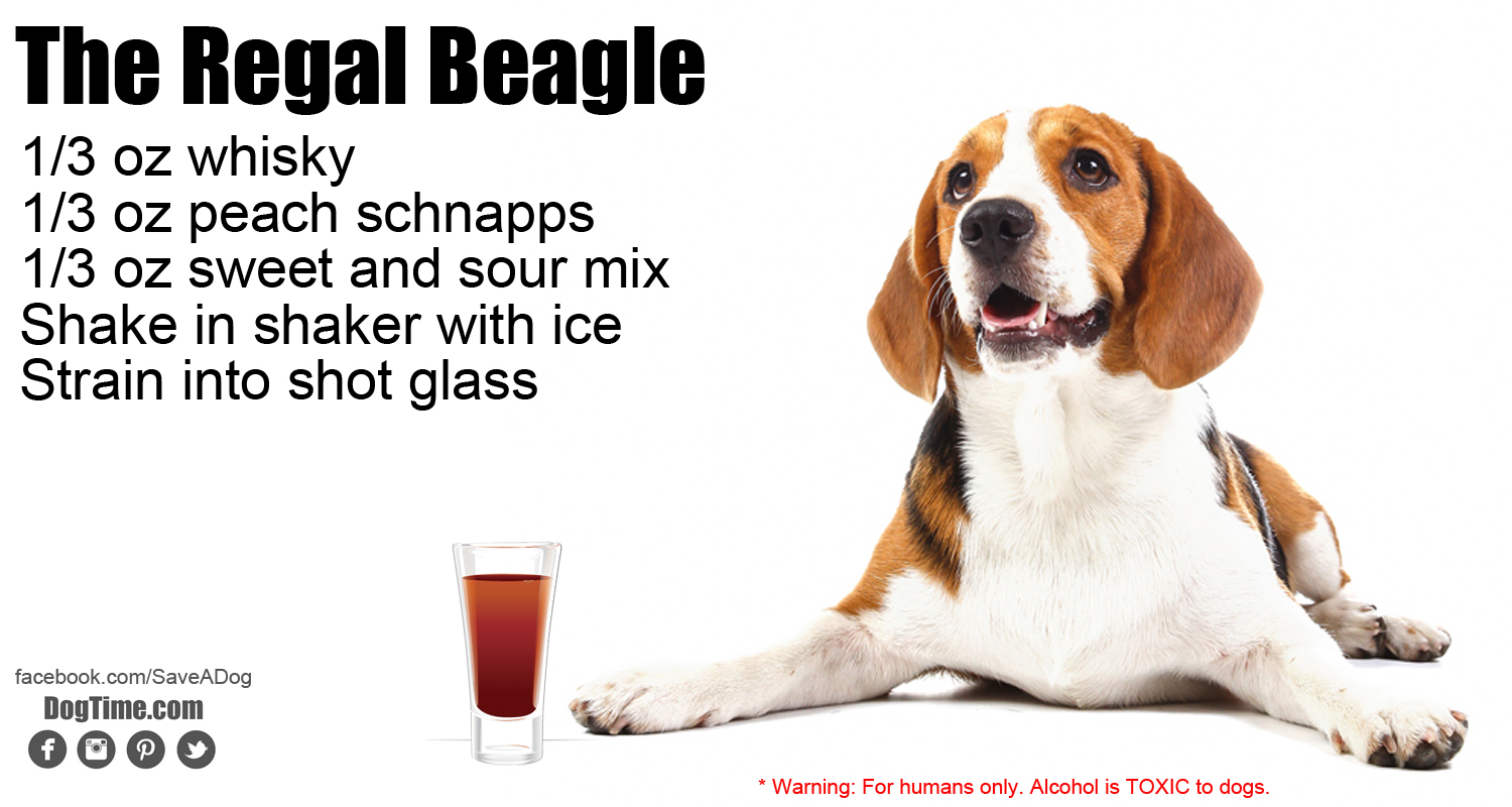 Regal Beagle Cocktail Recipe