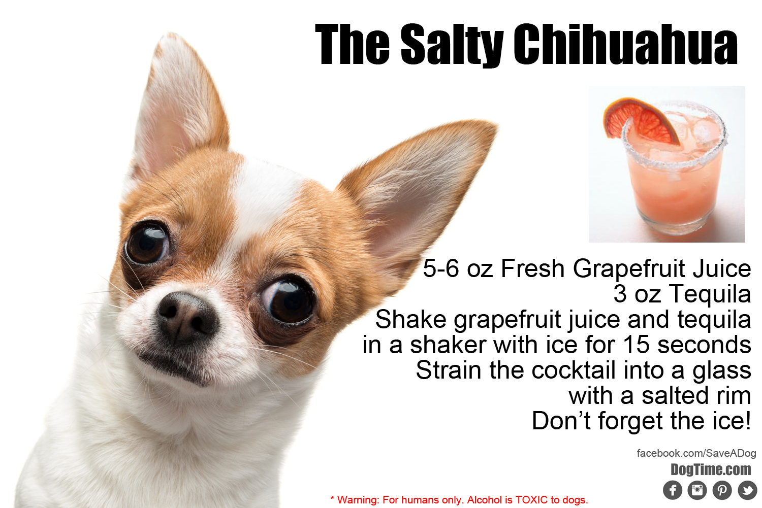 Salty Chihuahua Cocktail Recipe