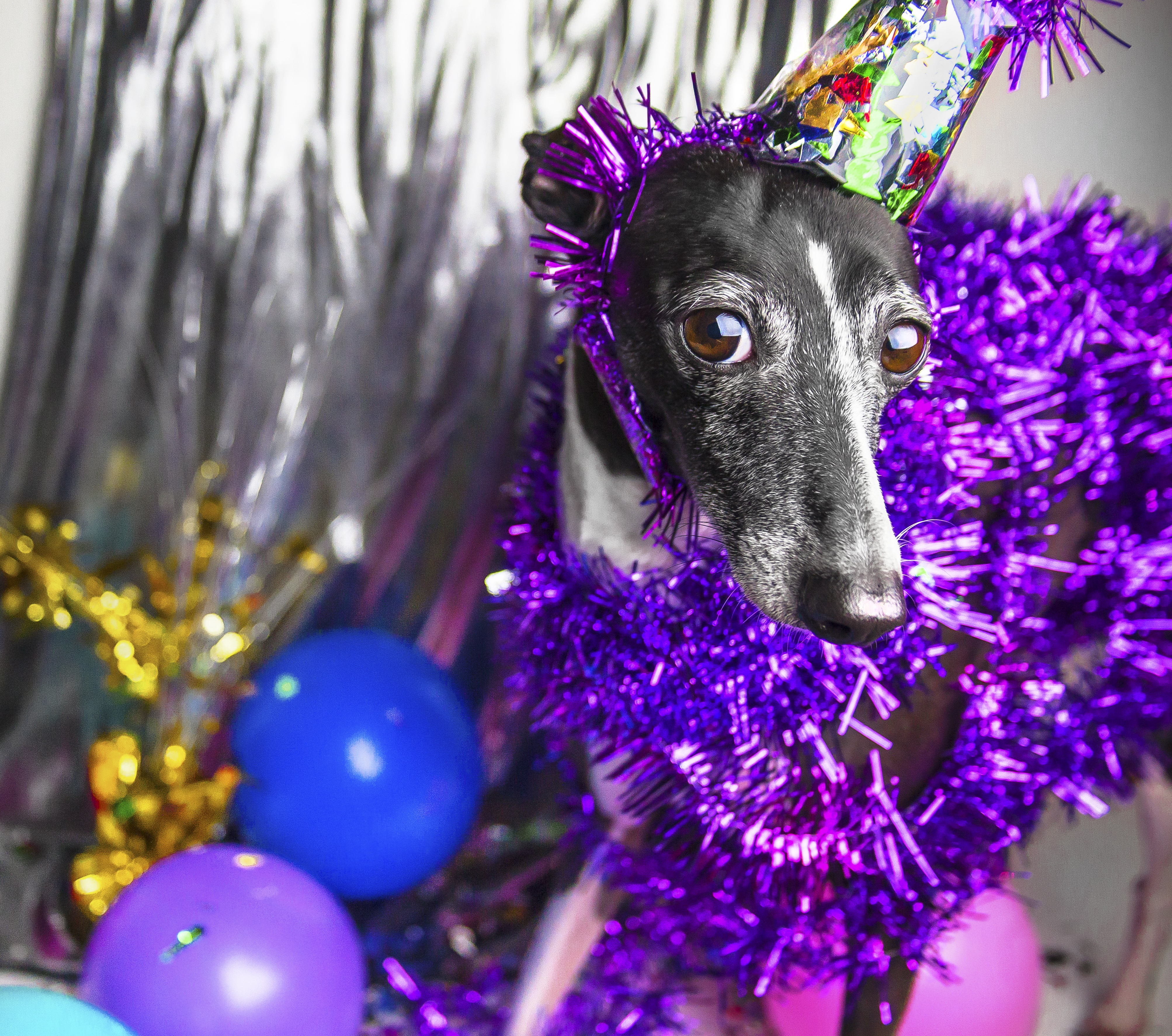 Dogs Celebrating New Year's Eve